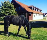 Pensjonat w Stadninie koni Cheval