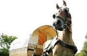 Wozy cygańskiecaravaning konny