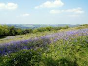 Meldon View
