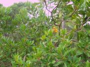 Aljibe de Monastrell
