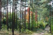 Leśna Radość