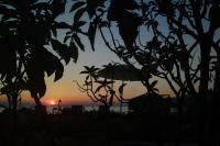 Palmina Mare