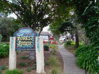 Forest Lodge, Chaty - Carmel