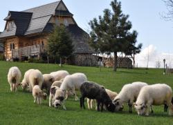 noclegi Ząb Dom z widokiem na Tatry
