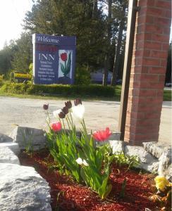 obrázek - Tulip Inn