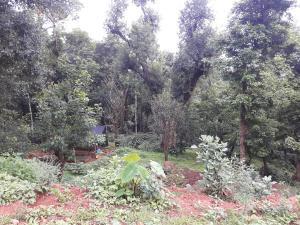 Namma Chikmagaluru NC-GVH, Homestays  Attigundi - big - 30