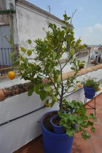 Mi Casa En Cordoba, Apartmány  Córdoba - big - 19