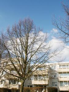 "obrázek - Boarding House ""Herzogpark Celle"""