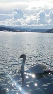 L Ecrin du Lac