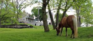 Rocky Acre Farm Bed & Breakfast - Hotel - Mount Joy