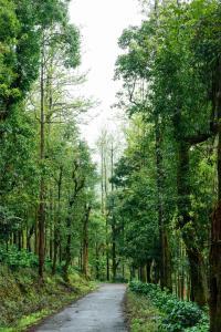 Nature Nirvana, Magánszobák  Attigundi - big - 10