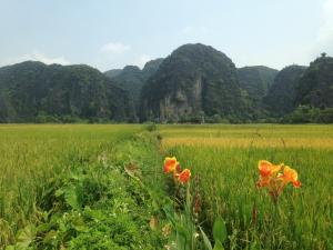 Tam Coc Mountain View Homestay