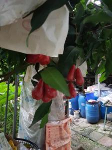 Ganoun Homestay, Проживание в семье  Meinong - big - 16