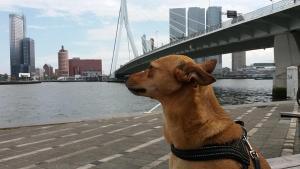 van Berk en Hout, 3014 RG Rotterdam