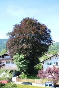 Alpen - Apartments, Apartmány  Garmisch-Partenkirchen - big - 15
