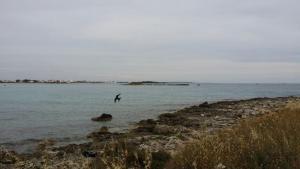 Salsedine, Guest houses  Porto Cesareo - big - 28
