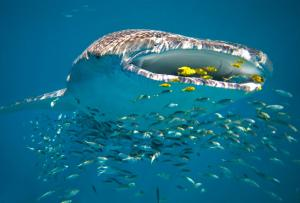 Sal Salis Ningaloo Reef (21 of 38)