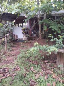 La Casa de la Iguana, San Lorenzo