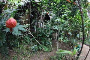 obrázek - Mandala Inn