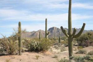 Tucson Desert Oasis - Nelson