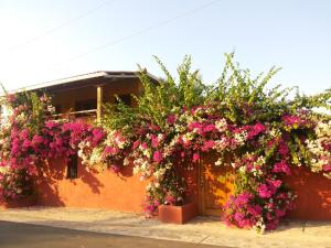 Villa Pelicano, Bed and breakfasts  Las Tablas - big - 110