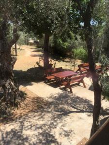 B&B Skadar Lake Murici, Bed & Breakfasts  Bar - big - 3