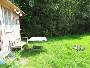 Vogelnest - Wald
