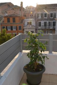 Casa Afrodite, Ferienwohnungen  Korfu-Stadt - big - 29