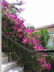 Aegina's Flowers house