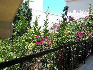 Aegina's Flowers house Aegina Greece