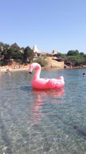 Auberges de jeunesse - Residenza Chrysalis Bay