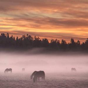 Kolhidskie Vorota Usadba, Farm stays  Mezmay - big - 179