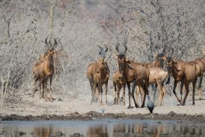 Safarihoek Lodge (30 of 33)