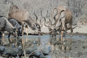 Safarihoek Lodge (23 of 33)