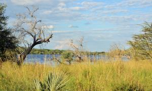 Thebe River safaris, Hotely  Kasane - big - 16