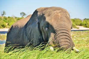 Thebe River safaris, Hotely  Kasane - big - 20