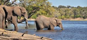 Thebe River safaris, Hotely  Kasane - big - 19