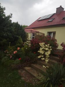 Domek pod brzozą