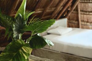 Residencia Gorila, Apartmanhotelek  Tulum - big - 205