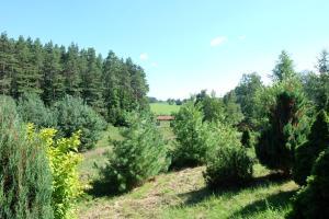 Siedlisko Mazurskie koło Mikołajek