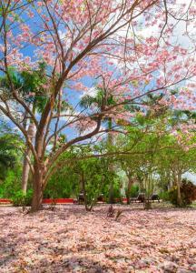 Hacienda San José (27 of 83)