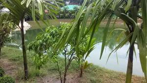 Green View Resort & Convention Center, Üdülőtelepek  Dakka - big - 130