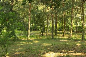Kasztelania Pod Lipami, Agriturismi  Zakroczym - big - 28