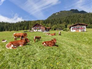 Ferienhaus Lehen - Apartment - Berchtesgadener Land