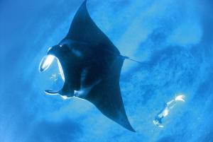 Sal Salis Ningaloo Reef (29 of 38)