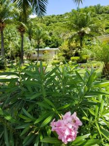 Blue Horizons Garden Resort (20 of 33)