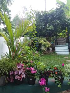Jungle View apartment, Appartamenti  Unawatuna - big - 6