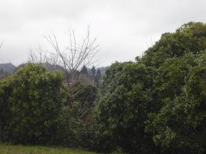 Zen Two-Bedroom Unit, Apartmány  Rotorua - big - 37