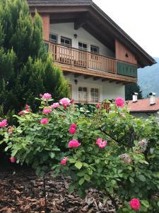 La Casa Verde - Apartment - Canale San Bovo