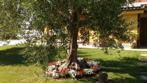 L'Antico Vigneto, Guest houses  Marino - big - 21